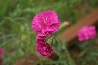 Patrick flowers